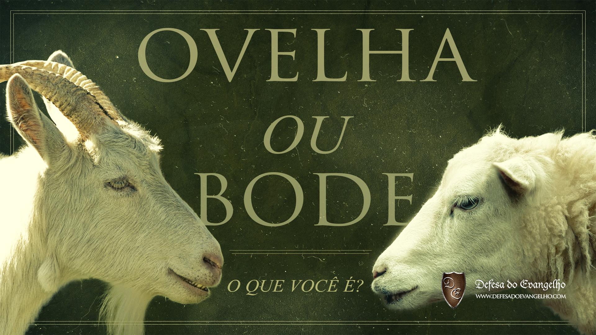 ovelha-ou-bode